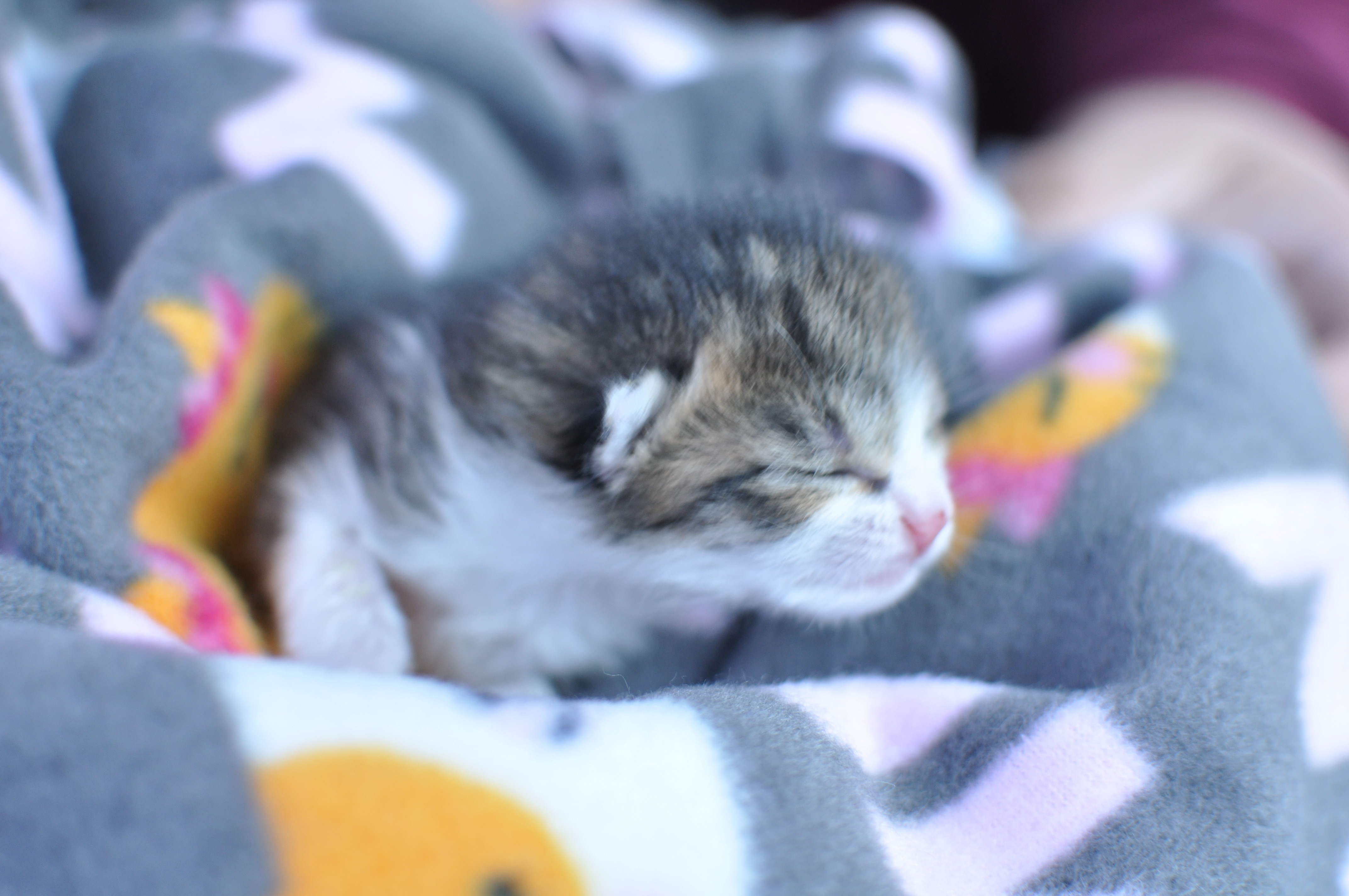 Donate For The Baby Animals Of Rescue Village Geauga